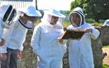 Examining a bee frame on the Sustainable Bee Keeping course at Kate Humble's Farm Humble By Nature