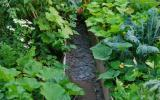 Forest Gardening, Permaculture Design & Edible Gardens at Humble by Nature