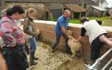 Tim catching a sheep on the smallholding course at Kate Humble's Farm Humble by Nature