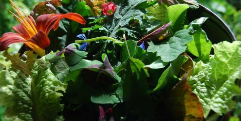 Forest Gardening, Permaculture Design & Edible Garden Design at Humble by Nature