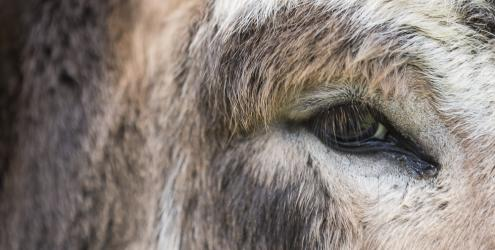 Learn to take photographs of the natural world animals and landscape at Kate Humble's farm Humble by Nature in Monmouth South Wales