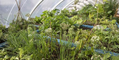 Aquaponics at Humble by Nature Kate Humble's farm in Monmouth South Wales
