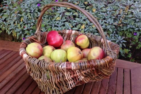 Weave A Fresh Willow Frame Basket at Humble by Nature